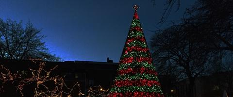 Central Park Johnstown Christmas Tree