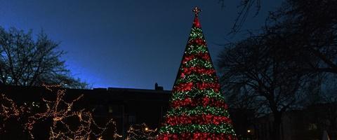 Central Park Johnstown Christmas Tree