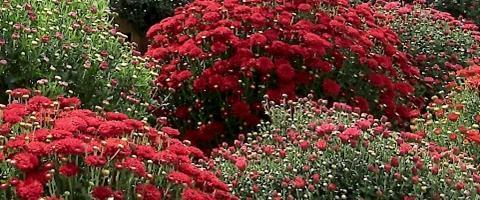 Harvest Fest - Bushel of flowers