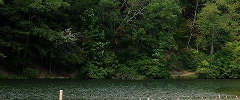 Pickerel Pond