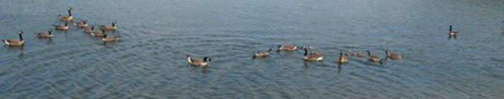 Visit Johnstown Pa | Duman Lake County Park