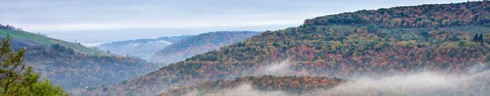 Visit Johnstown Pa   Wildlife